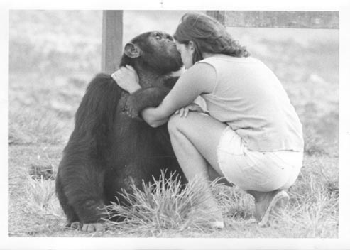 Linda Marchant with chimpanzee